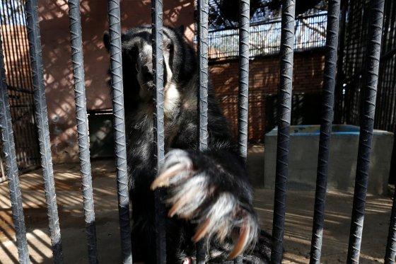 bear starving venezuela zoo