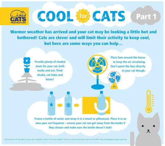cats cool infographic