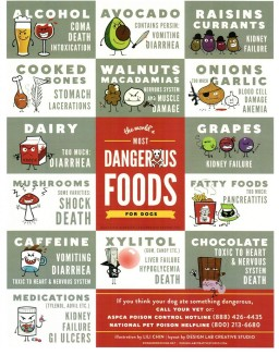 Foods and Additives Toxic to Dogs