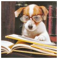 dog glasses reads papers