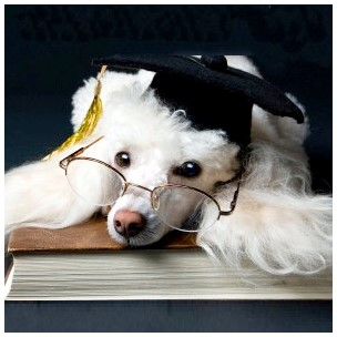 dog grad cap reads