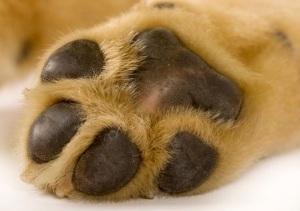 paw-dog