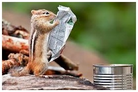 squirrel reads papers