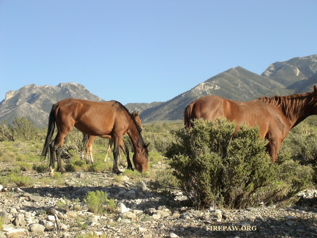 wild horses-stamped firepaw