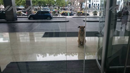 DOG WAITS