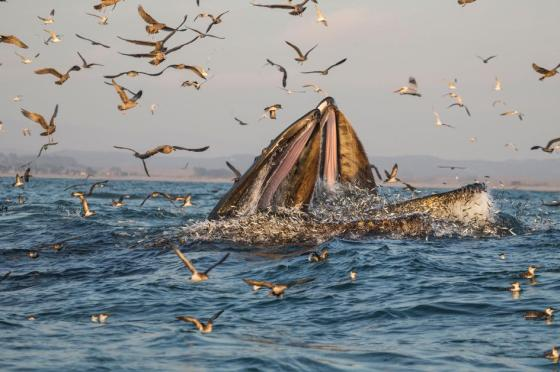 humpback-whale-birds