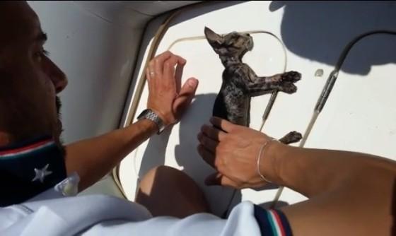 kitten-rescue-1