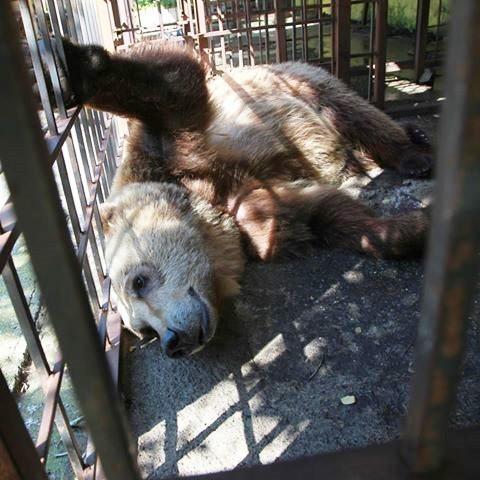 bear-cage-2