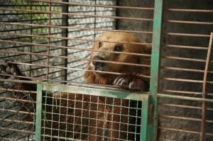 bear-cage