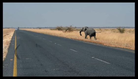 elephant-crossing
