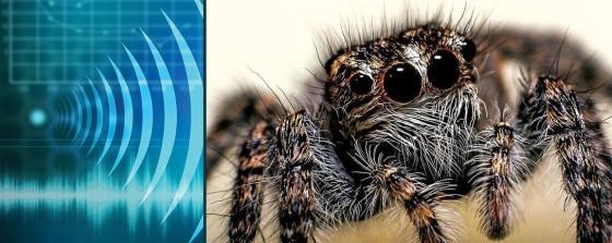 spider-sense-sound