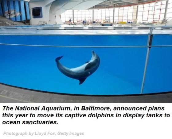 captive-dolphin