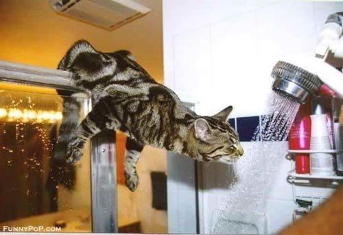 cat-shower