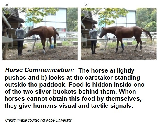horses-ask-for-help
