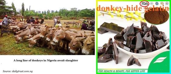 donkeys-africa