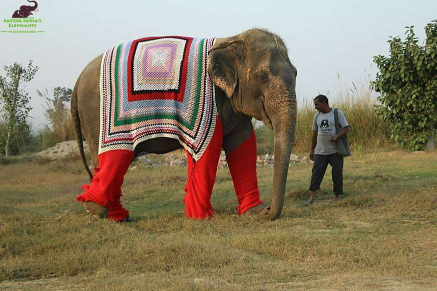 elephant-sweaters