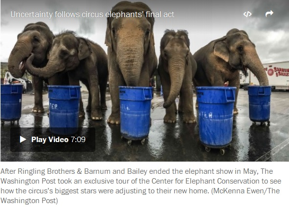 elephants-circus-eat-out-of-industrial-drums
