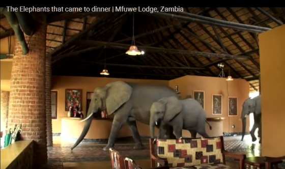 elephants-who-came-to-dinner