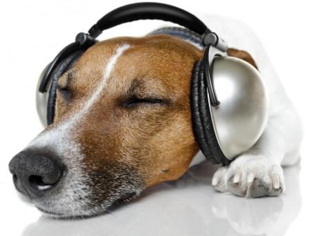 dog-headphones