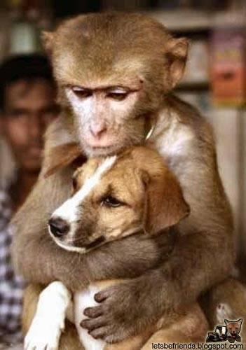 monkey-hugs-dog-2