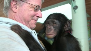 chimp and steven wise