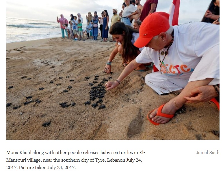 animal activist saving sea turtles