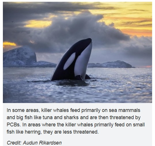 orca endangered by pcbs
