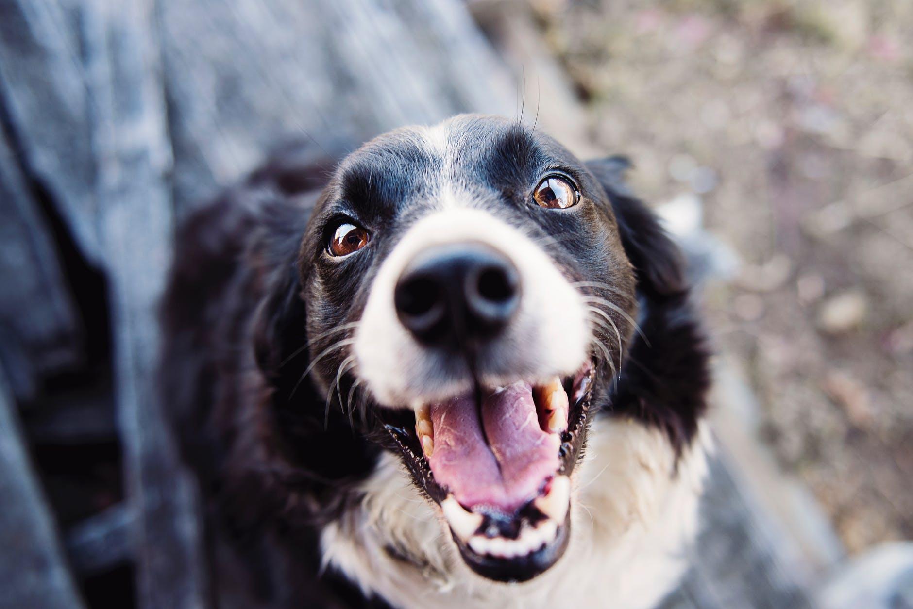 animal blur canine close up