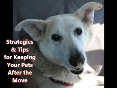 tips for keeping pets-moving-MT-Snapshot 3 (5-22-2019 4-13 PM)