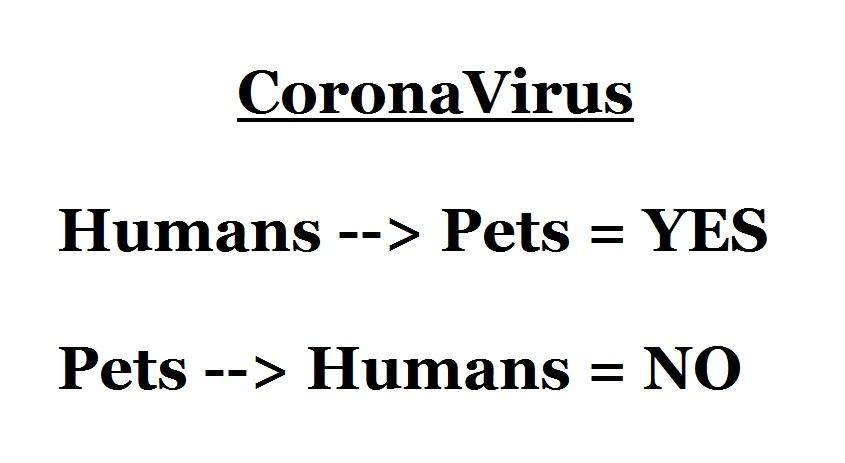human-pet coronovirus