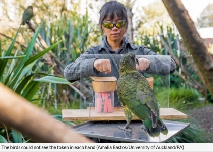 parrot token Girl
