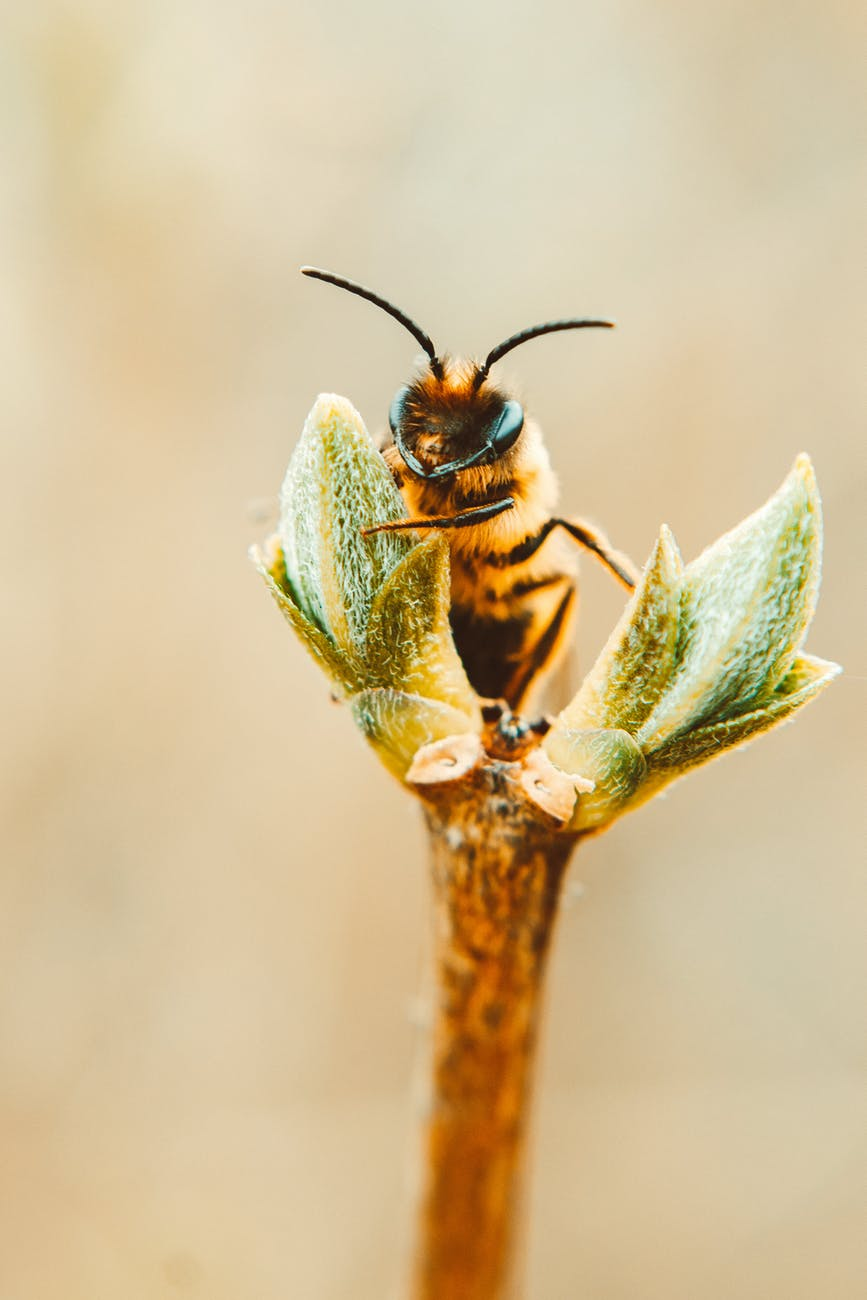 bee on a plant