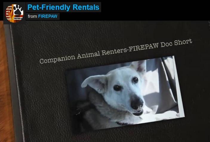 video-companion animal renters