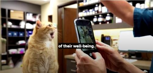 cat happy app