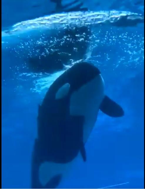 KISKA ORCA