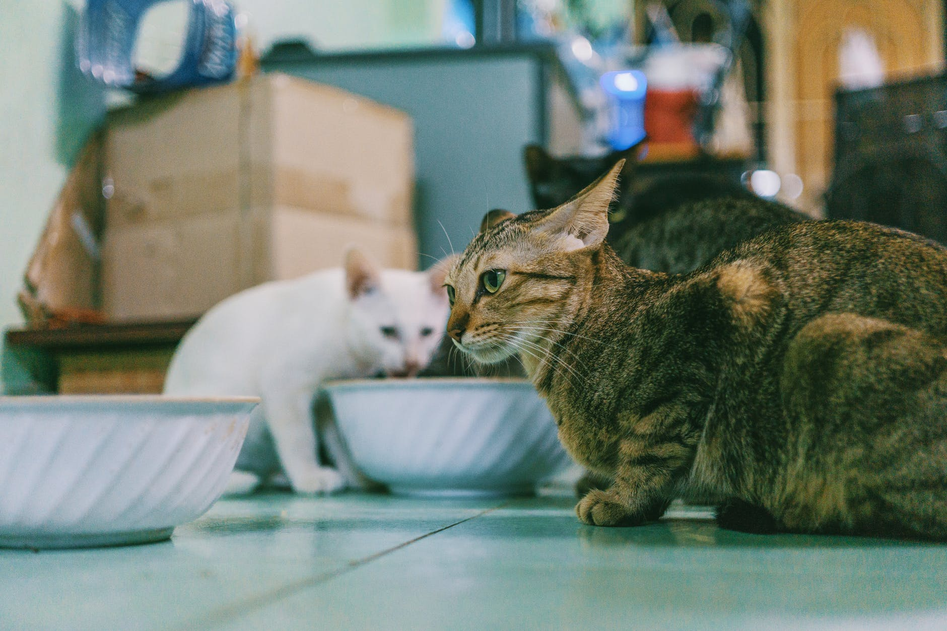 photography of two cats